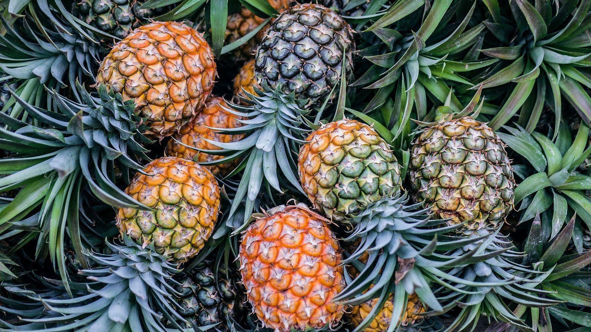 orange and green pineapple fruits